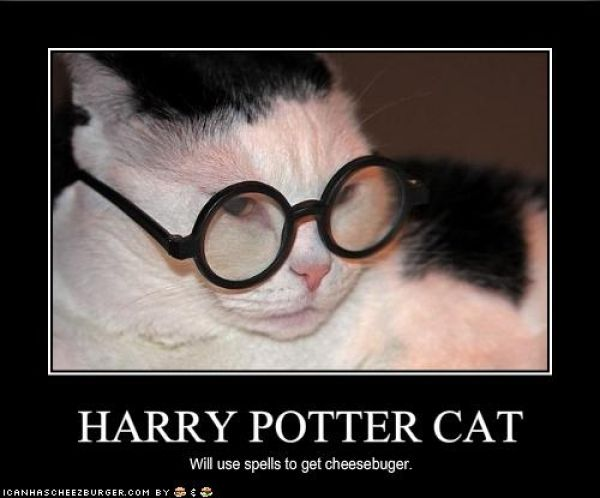 Pets Wizards