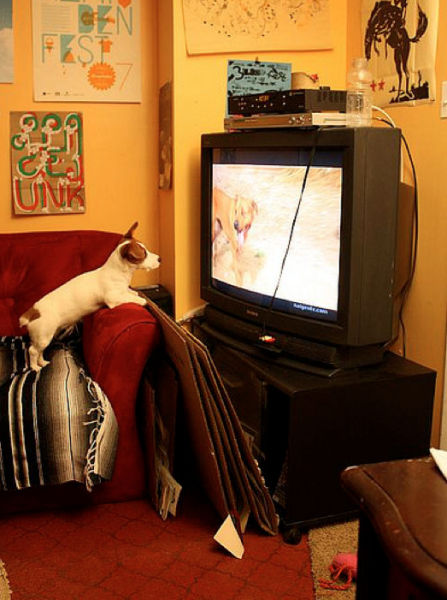 T.V. Isnt just for Humans Anymore