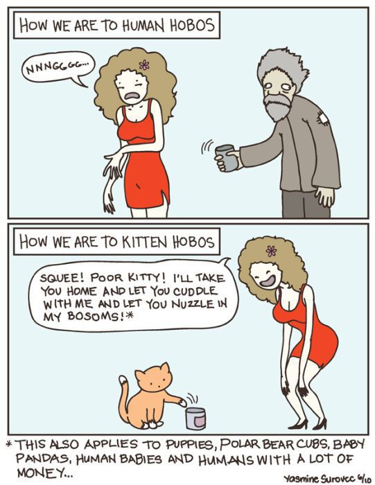 Hilarious Comics with Cats