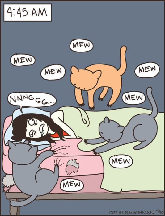 Hilarious Comics with Cats