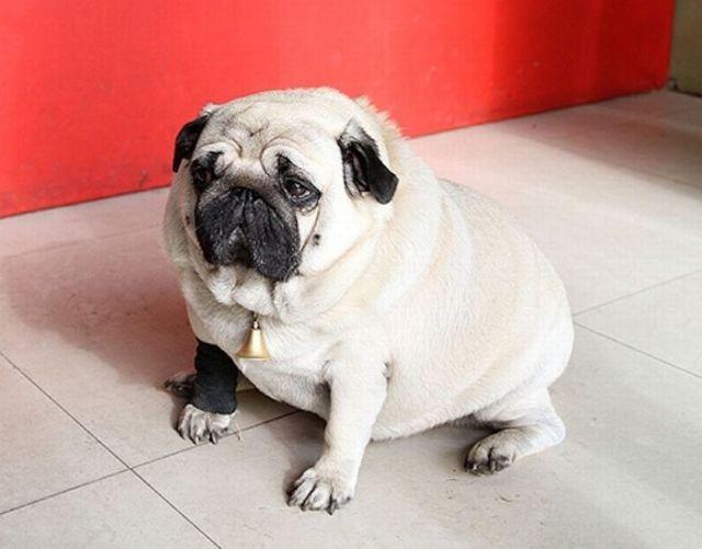 Heavy Duty Doggie