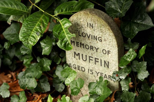 Pet Cemetery in Central London