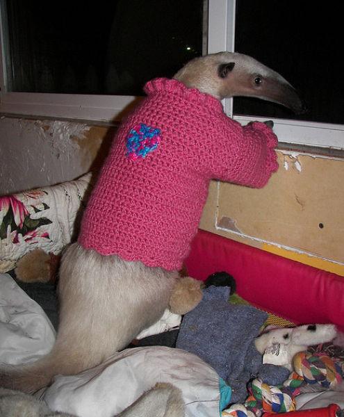 Pet Anteater