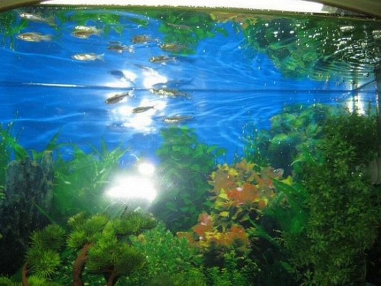 An Unusual Fish Tank