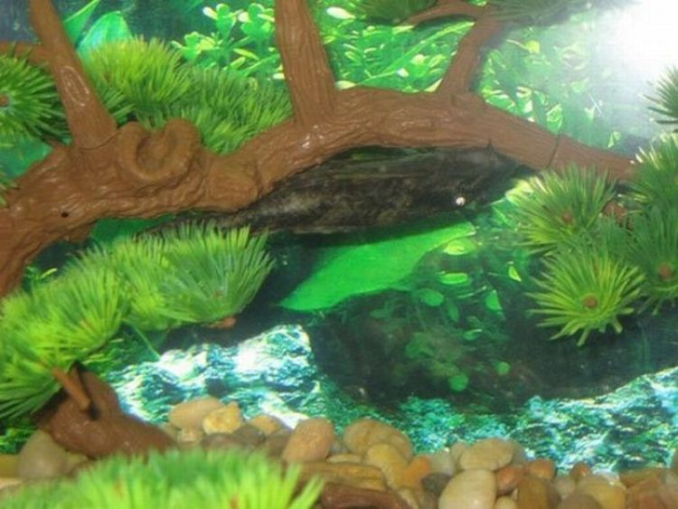 An Unusual Fish Tank