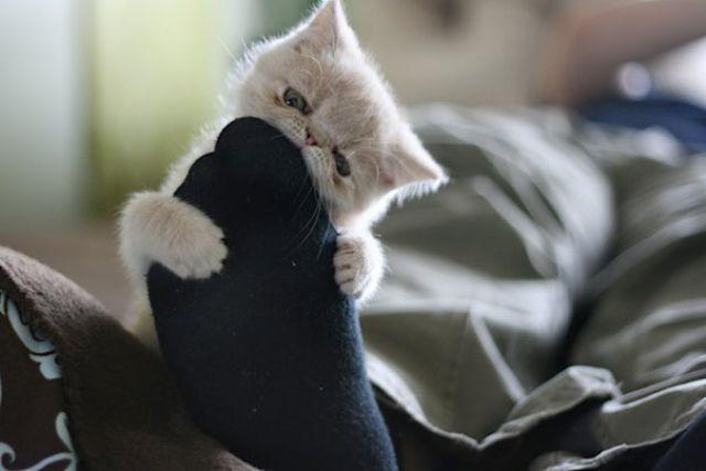 Very Cute Little Ball of Fluff