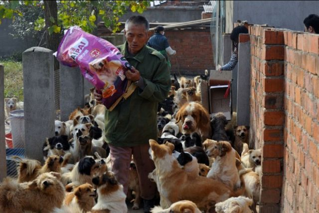 Woman from China Adopts 1,500 Dogs  200 Cats