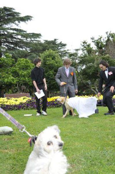 Woofy Wedding