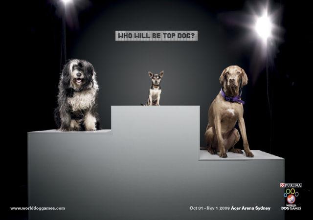Animals Promoting Goodies