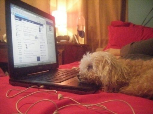 Canines and Computers