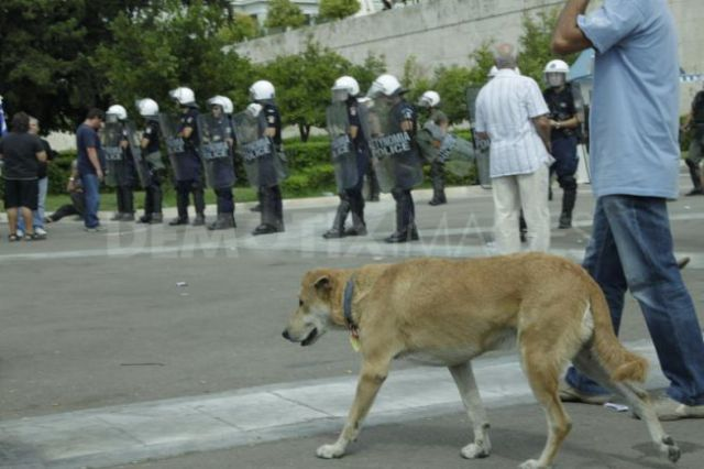 The Return of the Riot Dog