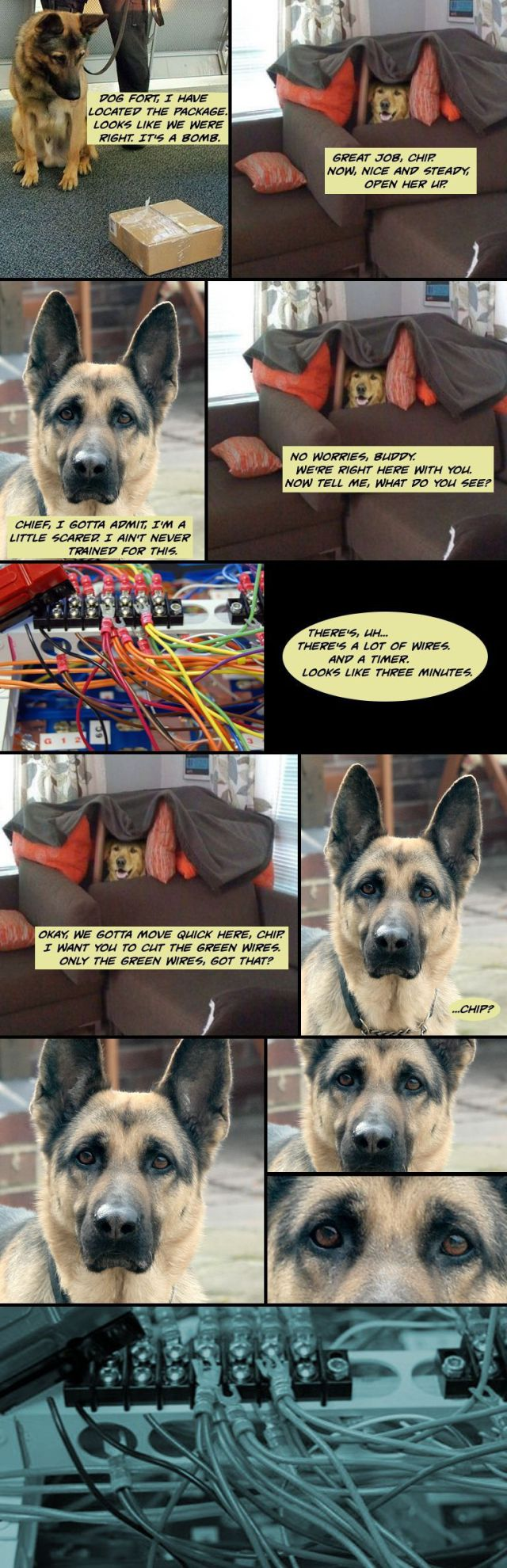 Dog Fort Comics and Memes
