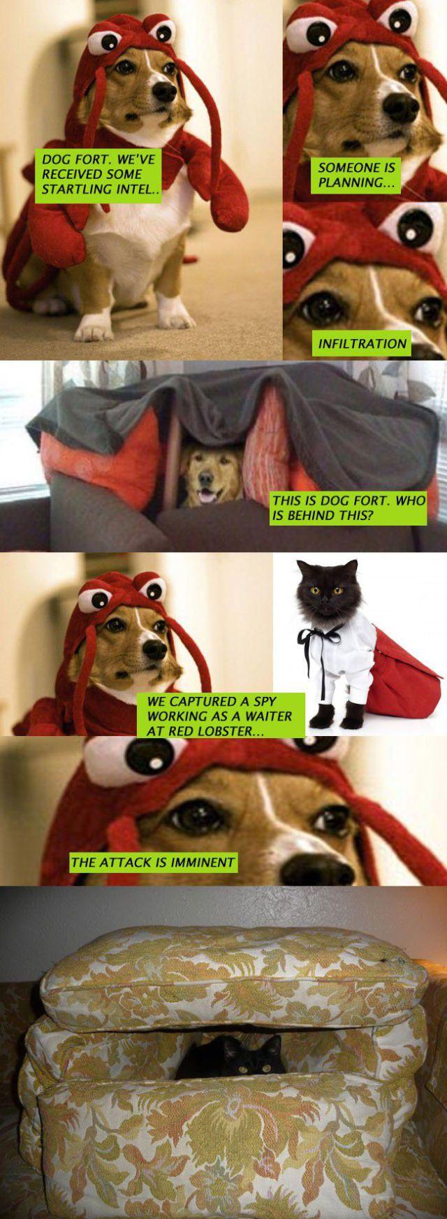 Dog Fort Comics and Memes