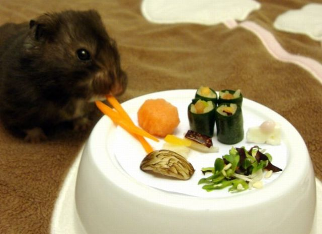 Hamsters Like Sushi Too