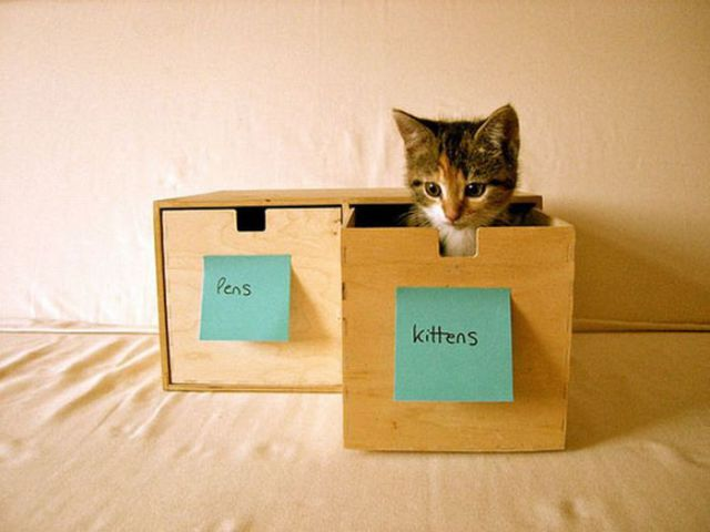 How to Know Where Your Cats Are?