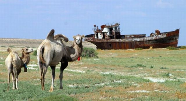 Camels in the Sea?