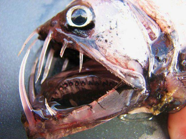 Hell Fish