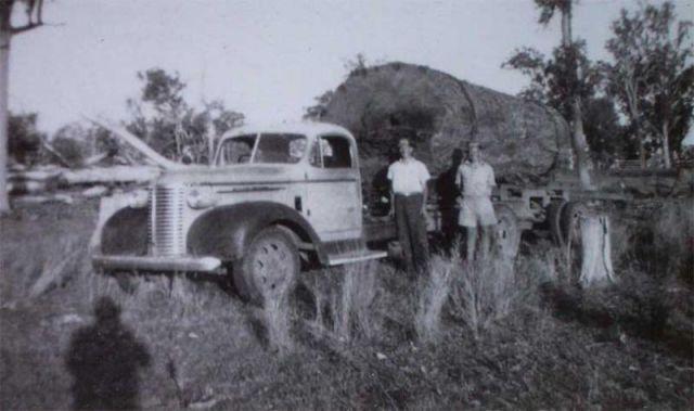 When Trees Were Huge...
