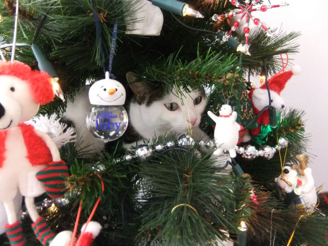Christmas Tree Cats