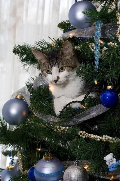 24 Christmas Tree Cats
