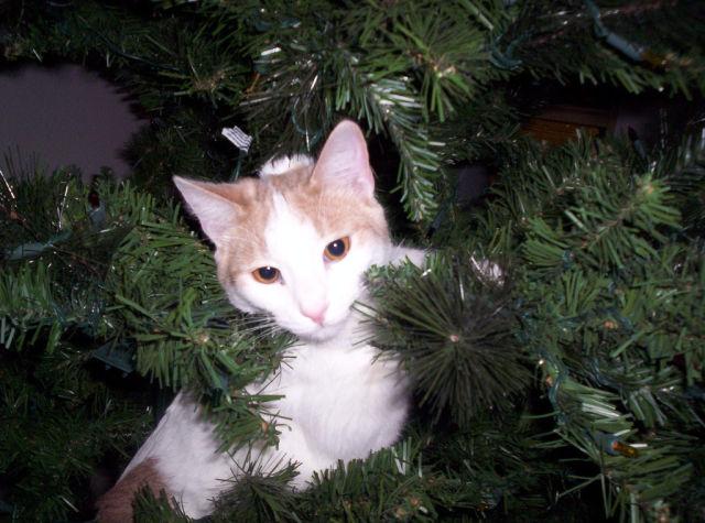 Christmas Tree Cats