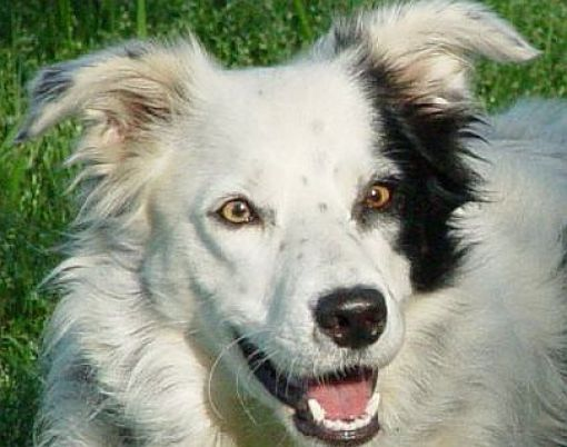 Chaser is a 6 year old border collie and has managed to learn the names of