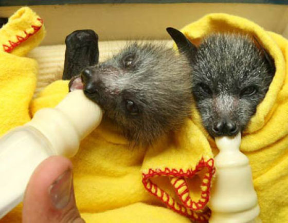 Blankets and Baby Bats