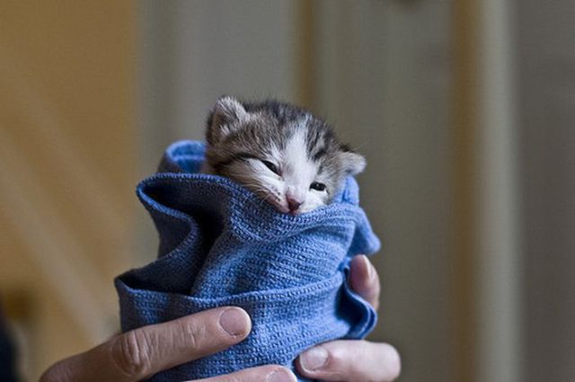 The Smallest Pets