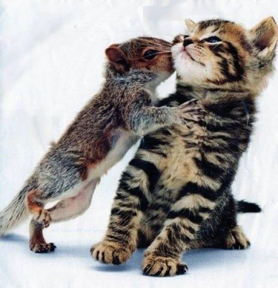 Animals Being Cute