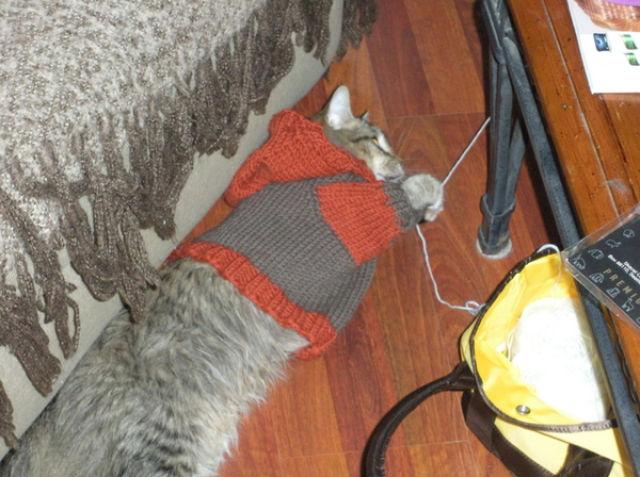 Covered Kitties