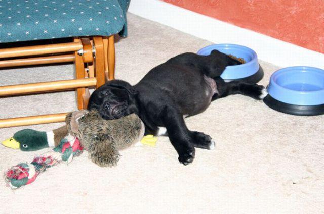 Drowsy Doggies