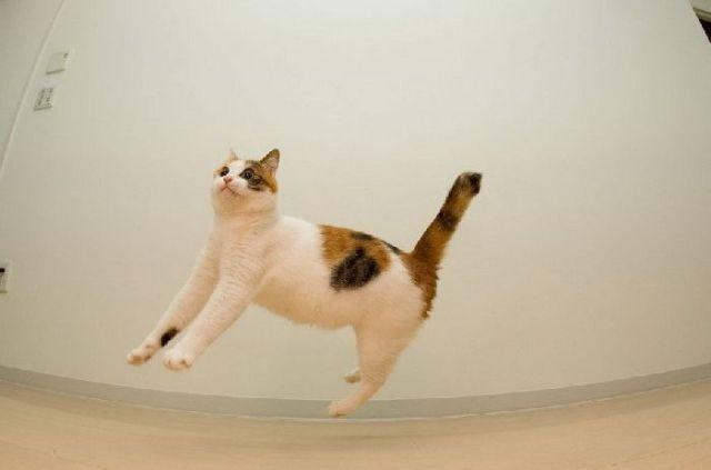 Airborne Felines