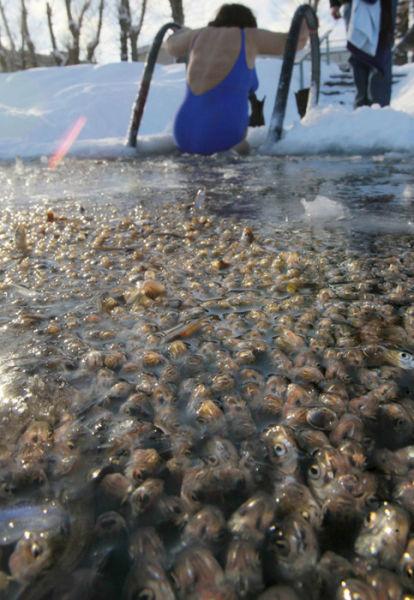 Death in the Saint-Petersburg Ponds