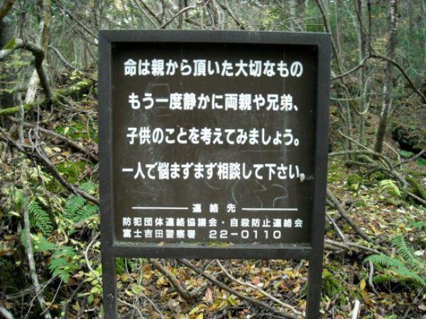 Uncanny Factoid: Suicide Forest