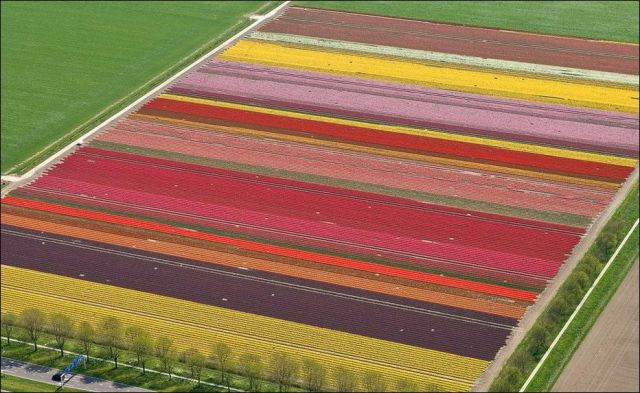 Beautiful Tulip Fields