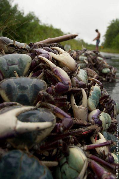 Crab Hunting in Brazil