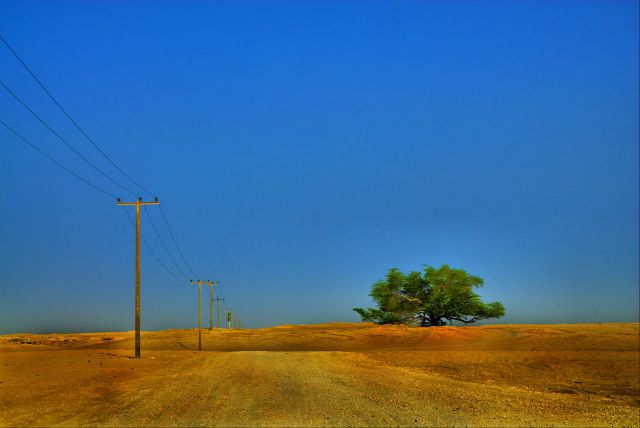 The Miraculous Tree in the Middle of the Desert