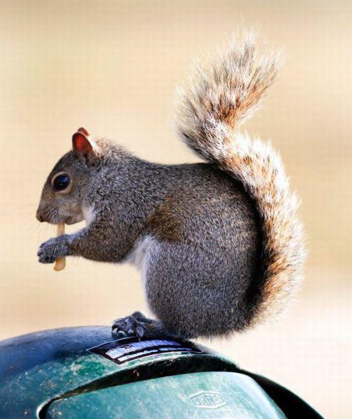 Those Pesky Squirrels