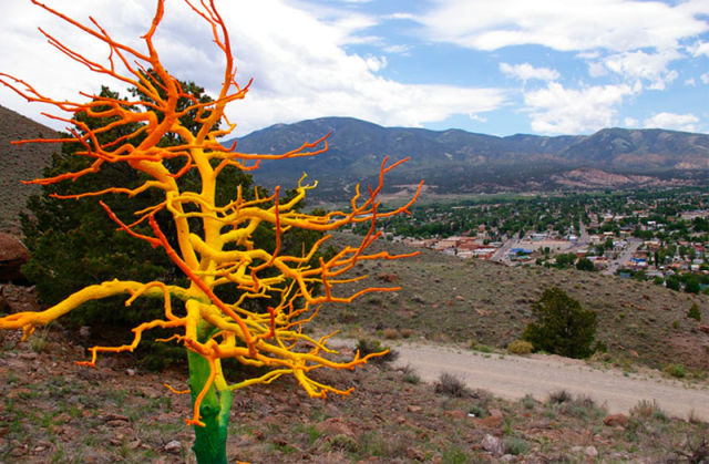 Dead Trees Come Alive In Colorado