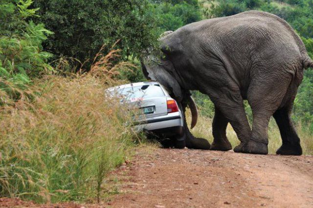 What Not to Do on a Safari