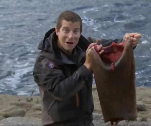 From Seal Carcass to Fashionable Wet Suit