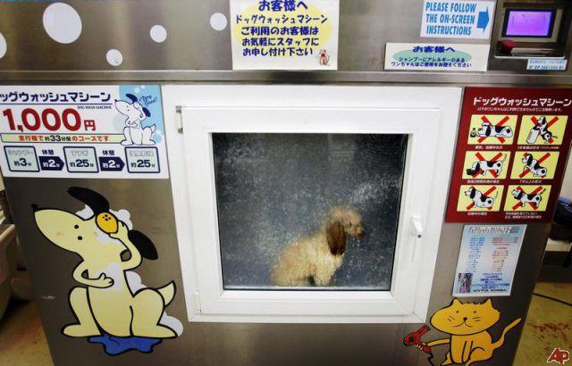 Uncanny Factoid: Clean Dog