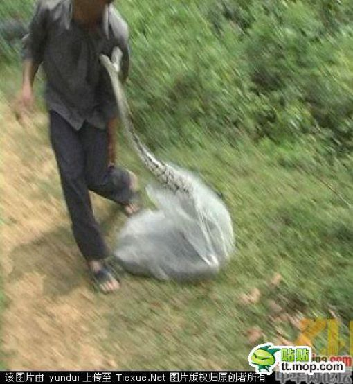 Snake in the Bag