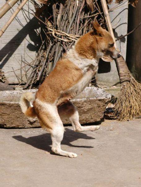 Upright Doggies