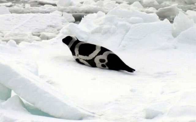 Cute Ribbon Seals