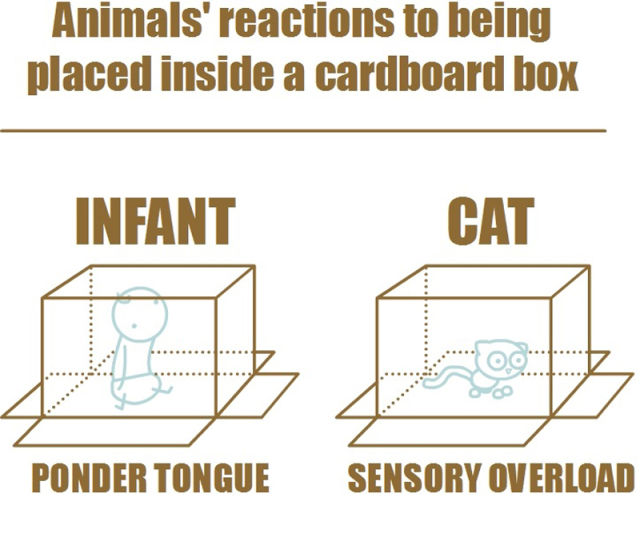 Different Reactions of Animals Put Down in the Box