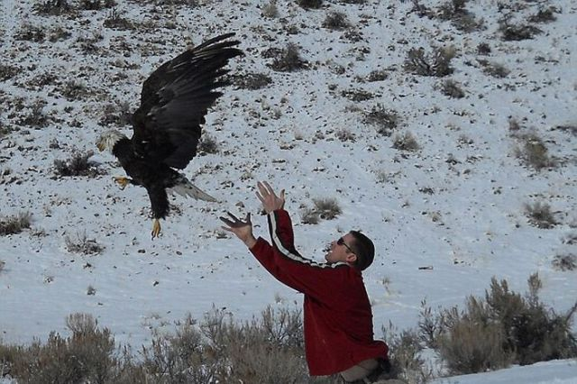 Incredible Landing of an Eagle