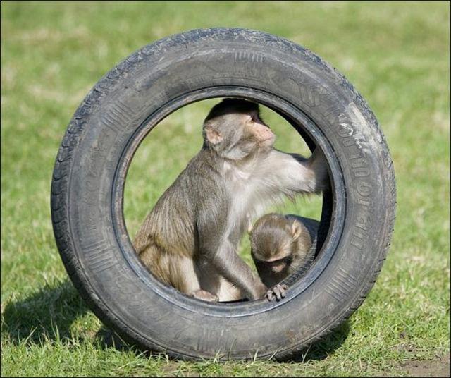 Monkeys Ruin a Car
