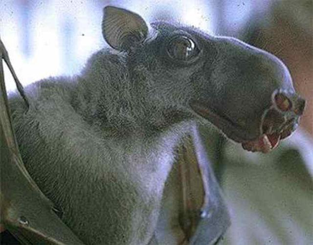 Some of the Weirdest Bats