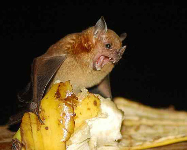 Some of the Weirdest Bats